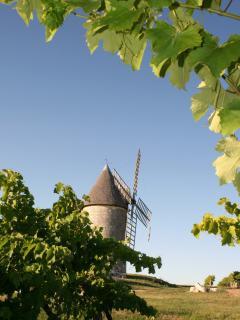 Les vignes de Cognac (15 km)