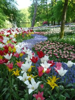 The Keukenhof in spring has the best flowers shows in the world