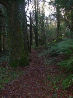 A woodland trail