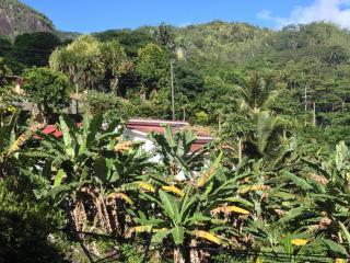 surrounded  by papaya