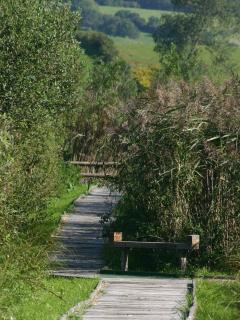 Board Walk Somerset Levels Nature Reserve 6 miles from Wall Eden Holidays