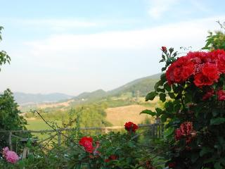Pietra Rosa, Urbino