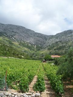 Vineyards Hvar