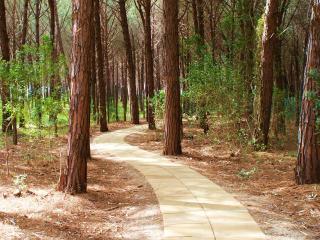 Forest walk to beach