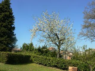 aria di primavera nel mio giardino