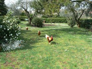c'è vita nel mio giardino!