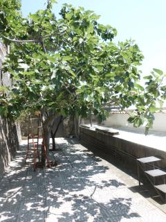 GARDEN with LEMON and FIG TREE