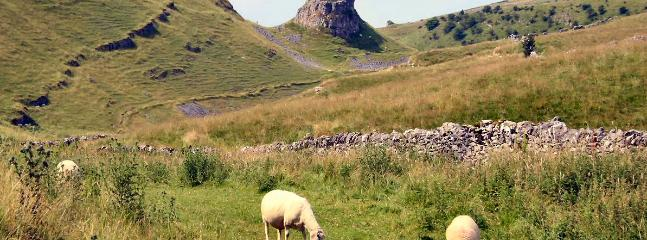 Cressbrook Dale, a few minutes walk from the cottage  is a site of special scientific interest.