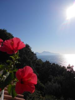 Villa Dafne Sorrento apt Rose - Capri  from the terrace apartment Rose