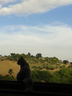 panorama dal giardino di Holiday Hill