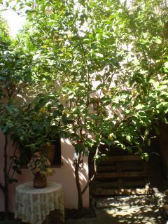 Árbol de limón en el patio