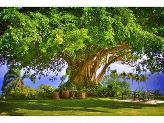 Arbre de vie ; Cet arbre magnifique inspiré un peintre de l'Ohio.  Site Web norsehillestate comporte plus d'exemples