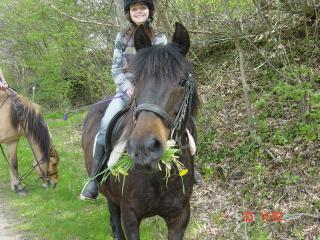 Horse riding available on request