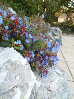 Une piscine très fleurs bleues!