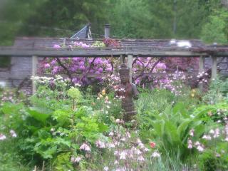 Medicinal Garden with Shiva