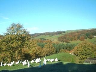 CRAGG HALL VIEW