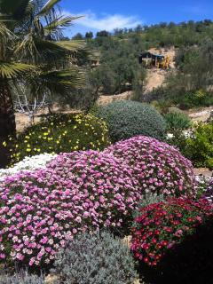 Flower border in May