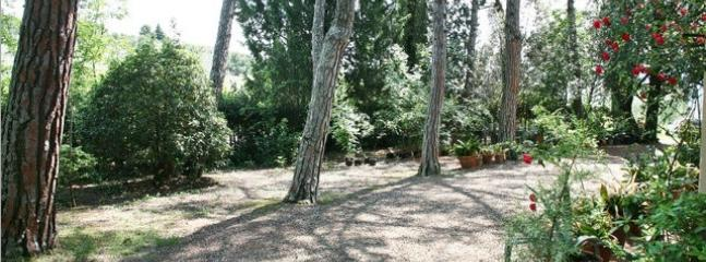Garden - Shady area under pine trees