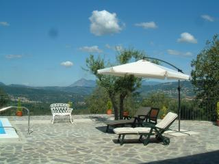 Sun loungers with the olive tree in the sunbathing area