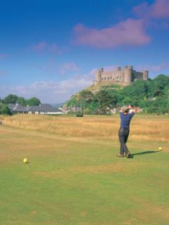 Golf at top rated Royal St Davids