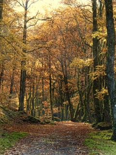 Local walk along La Sedelle, part of the Chemin de St Jacques de Compostelle (in autumn)