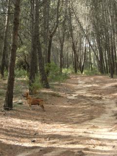 ruta por el Parque Natural del Foix, a 2 km.