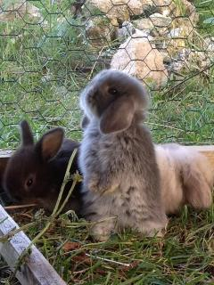Our lovely bunnies