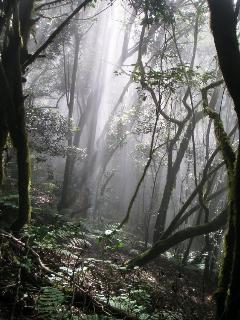 Parque National 'Garajonay'
