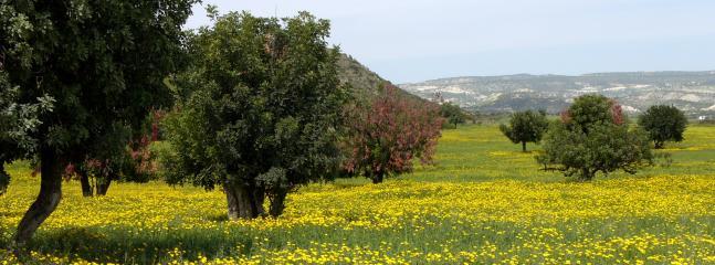Cyprus fields in Spring bloom