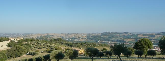 olive groves in the farmland