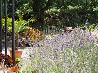 Interesting gardens! Mediterranean garden society member :)
