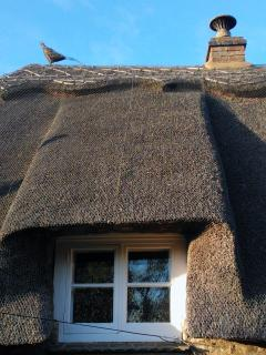 Traditional Thatch (with Pheasant!)