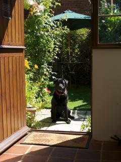 Well mannered pets welcome at Goleby's Cottage