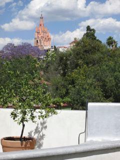 Parroquia during jacaranda season- March/April