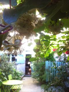 Relax in the vegetable / fruit garden - Summer.