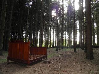 Lit de sapin dans la forêt de sapins