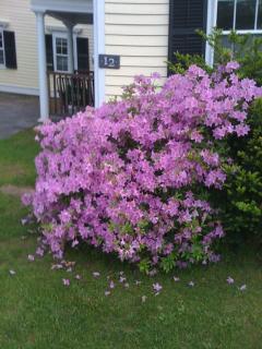 Spring in Stockbridge