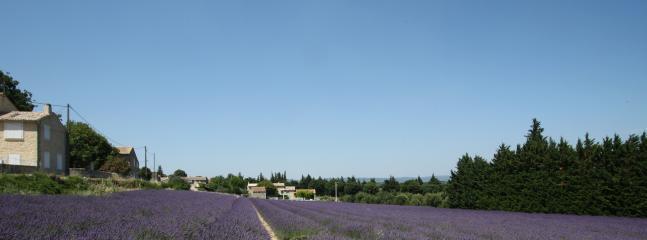Lavender in Chamaret