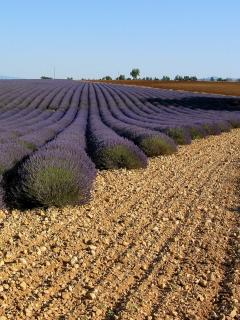 See the famous Provence