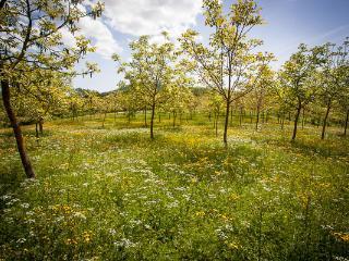 the walnut trees around the farm