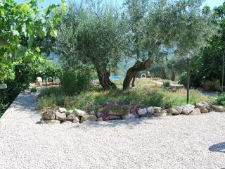 apartment overlooks vineyard and olives to the pool