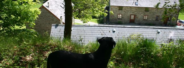 Behind Gorse Cottage