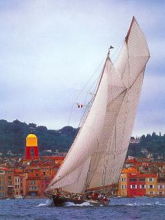 Les Voiles de St Tropez - one of many races