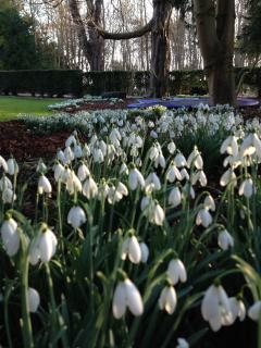 The Lodge and Hall are renown for their snowdrop display.