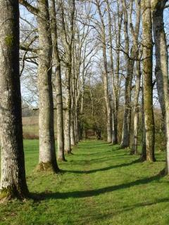 tree-lined path by river