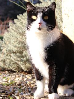 our cat Milou