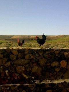 Nuestras gallinas.