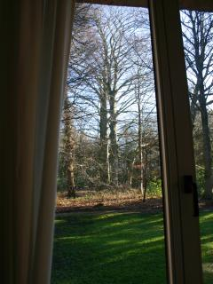 View from dining room. Out of every window lure ancient trees!