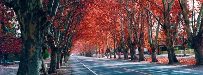 Entrada al corazón de Mendoza, San Rafael! tierra llena de actividad de la que usted debe disfrutar.