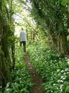 Walk through the lovely Friston Forest and Nature Reserve